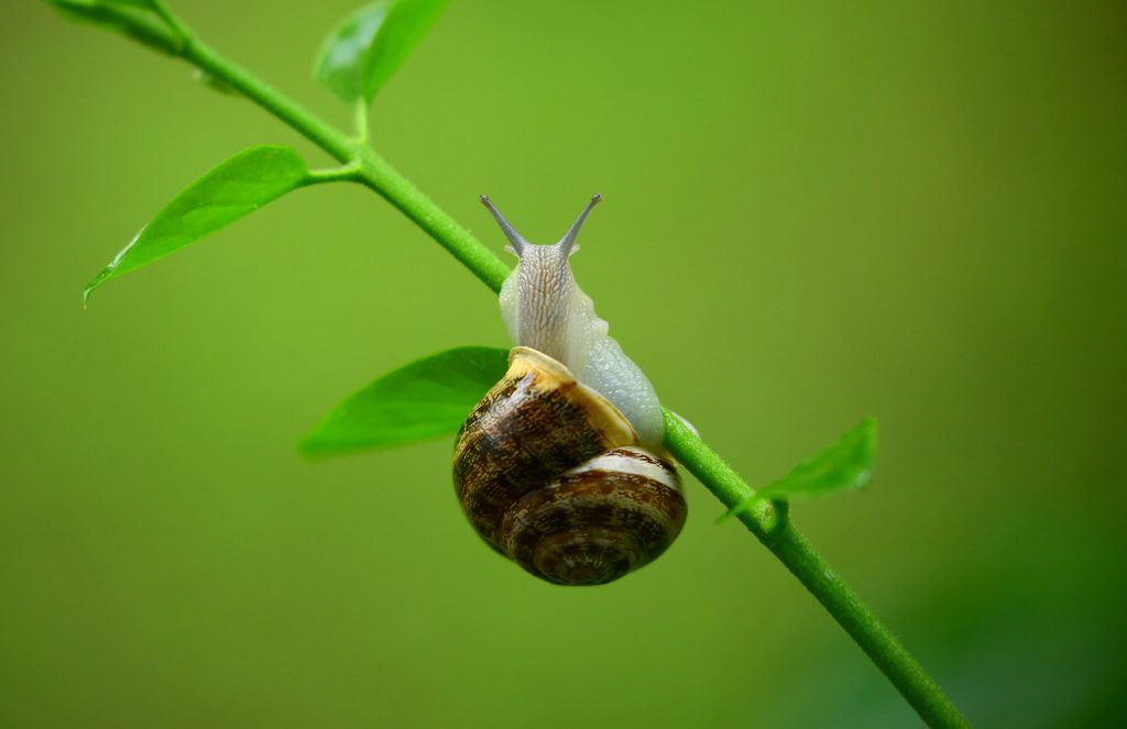 slow down before hiring your first employee - picture of a snail